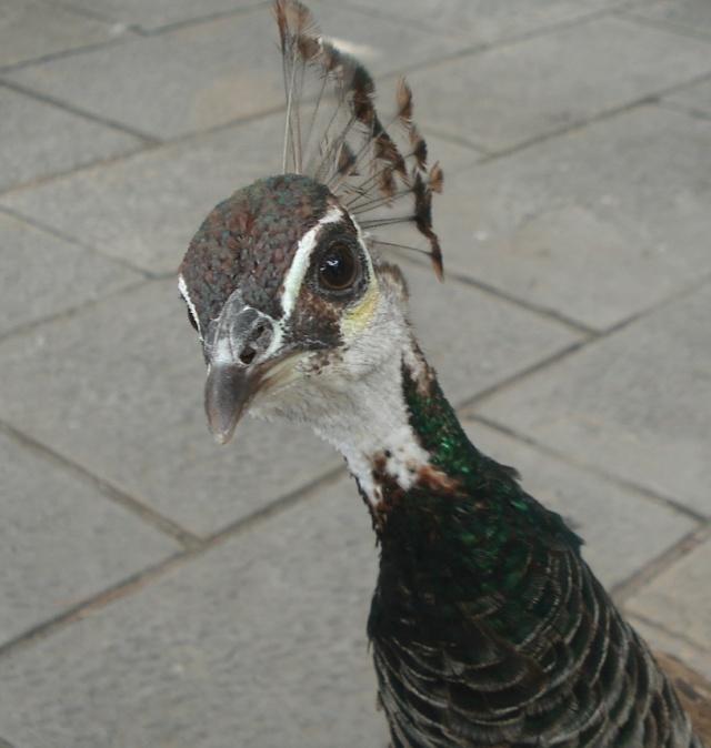 vogel1